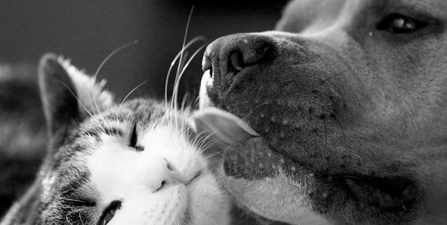 dog-and-cat-sumit-mehndiratta